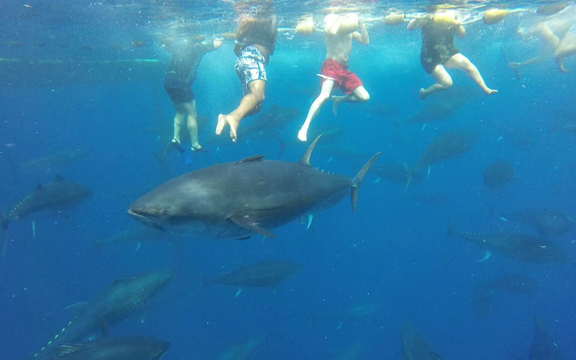 Experiencia Tuna Tour